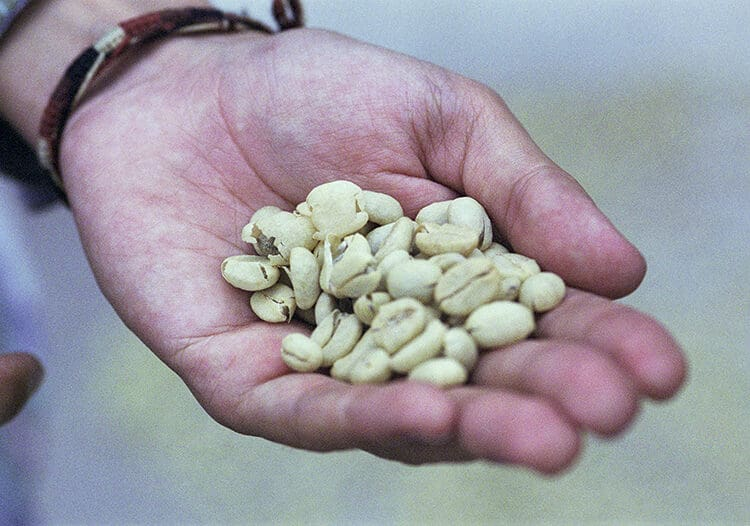 The Hand of Coffee