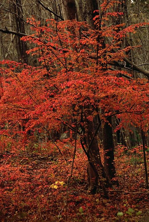 Contemplation Tree