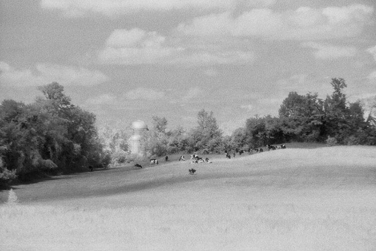 Danby Hill Farm