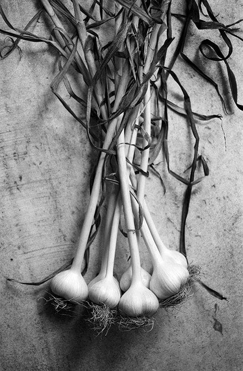 Garlic Study II