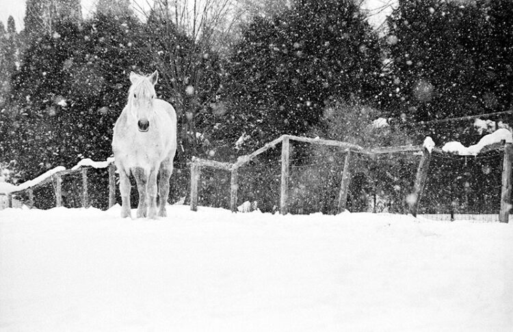 black and white photograph: horse