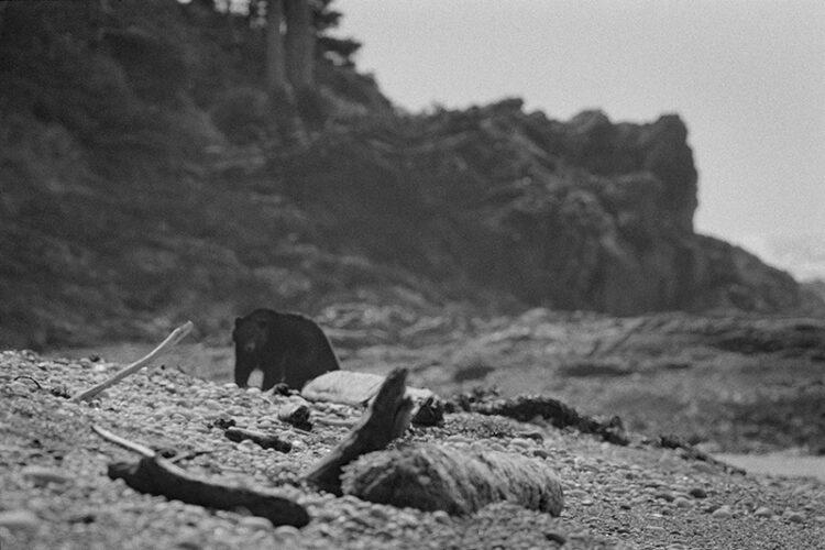 Black and white coastal photography: bear