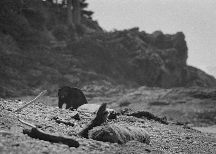 Black and white coastal photography: bear