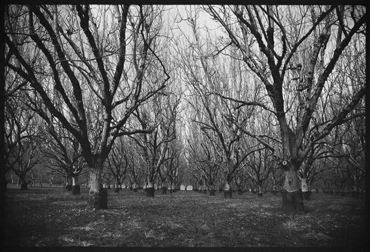Ancient Walnut Grove
