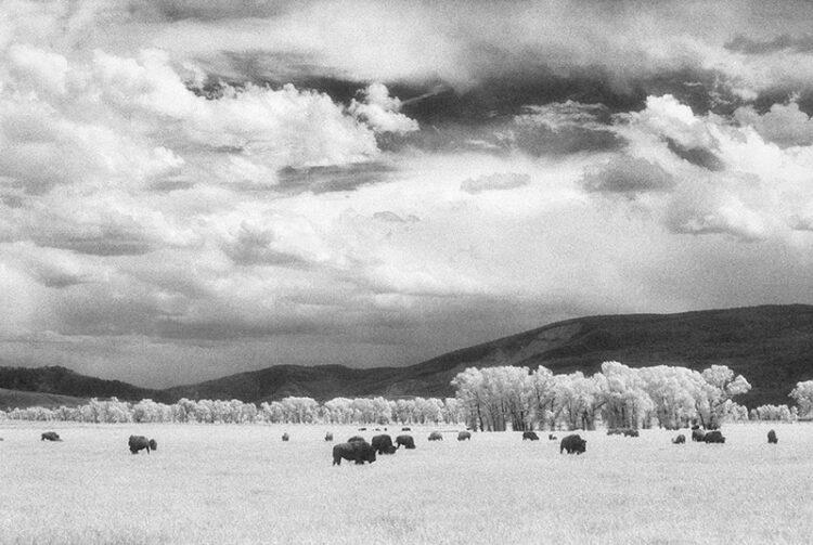 Buffalo Grounds